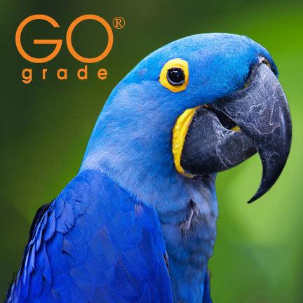GO Grade - Indigo Printing